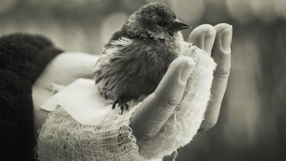 oiseau-dans-la-main